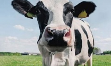 Balancing Your Cow's Diet at Grass