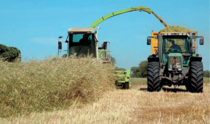 Cash in on cereal crop flexibility